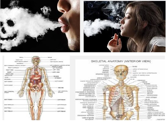 smoking body part effected